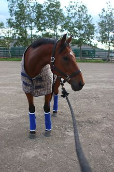 jumpsandbumps:  I don't think it's possible for my horse to be any more handsome.