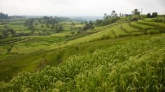 Jatiluwih ricefields Bali, Indonesia