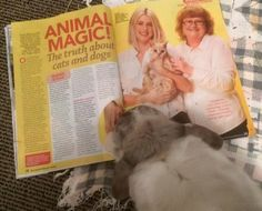 Faye Rogers - Animal Communication - New Zealand Animal Communication, Animal Magic, New Zealand, Dog Cat, Feelings, Cats, Animals, Animales, Ideas