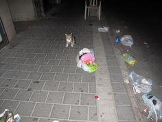 something strange happened here. Eilat Street, Tel Aviv.