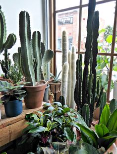 conservatory-archives-london-houseplant-house-plants-shop-cacti-gardenista