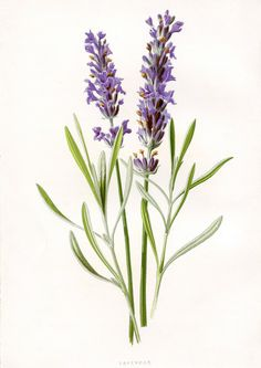 lavender-pictures-decoupage-13.jpg (1000×1415)