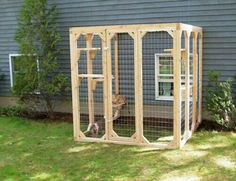 Outside safe play for cats.