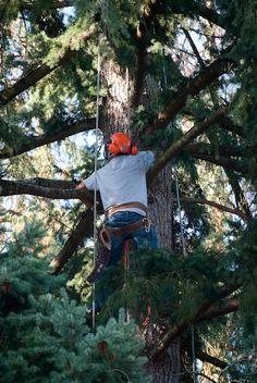 #treeremoval #treetrimming