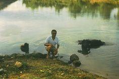1973-1974 Wasserbüffel beim Baden;   1973-1974 bathing water - buffalo;