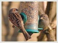 Vogelbescherming Nederland | Wat is goed voer