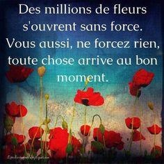 - #Bellescitations #Citationcourte #Citationvie #Citationsinspirantes #Phrasephilosophique #Printempscitation #voyagecitation