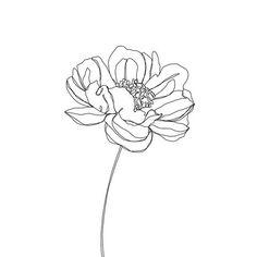 Line art tattoo draw tatoo Ideas Illustration Botanique, Botanical Illustration, Line Art Tattoos, Tattoo Drawings, Tattoo Art, Tatoos, Flower Tattoo Designs, Flower Tattoos, Redwood Tattoo