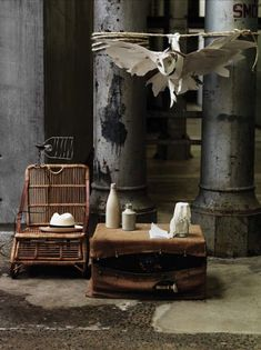 = Bowerbird by Sibella Court