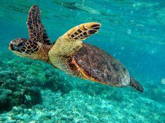 fiji animals - Google Search