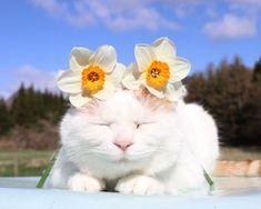 口紅水仙 | のせ猫オフィシャルブログ Powered by Ameba