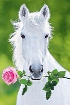 ♥ WHITE HORSE & PINK ROSE!