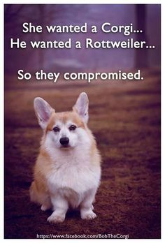 Bob Corgi - She wanted a Corgi, he wanted a  Rottweiler... so they compromised.