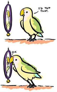 Because my bird does this all the freaking time.