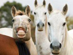 cheeeeeeeese   Park Lane Equestrian Center via Barnmice