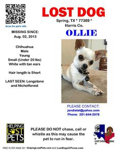 #lostdog #StillMissing #Ollie #SpringTX #Houston #TX  ollie has been missing since 08-02-13.  PLEASE HELP HIM COME HOME #LDOT