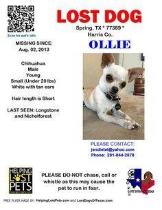 #lostdog #StillMissing #Ollie #SpringTX #Houston #TX  ollie has been missing since 08-02-13.  PLEASE HELP HIM COME HOME #LDOT lostdog stillmiss