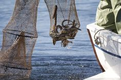Pesca delle anguille secondo un metodo tradizionale e sostenibile #100annisostenibilità