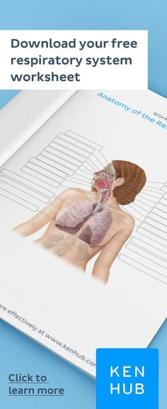 Struggling to learn the of the Start improving your knowledge right away with our handy worksheets. Learning Tools, Learning Resources, How To Study Anatomy, Anatomy Practice, Human Body Anatomy, Effective Learning, Medical Mnemonics, Med Student, Respiratory System