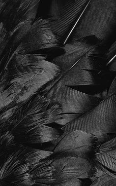 Black, feathers, texture, pattern, layer, exotic, detail - True Colors Brussels