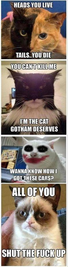 grumpy cat, funny cats