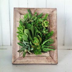Vertical Succulent Planter by VerticalFlora on Etsy, $55.00