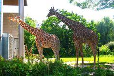 Zum Jubiläum in den zoologischen Garten Karlsruhe