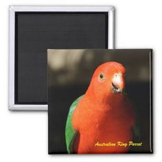 Australian Male King Parrot 2 Inch Square Magnet