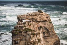A collection of photos from a windy day watching the Muriwai Gannet colony. Country Lifestyle, Windy Day, Close To Home, Photo Diary, Day Hike, Winter Travel, Still Image, Auckland, Weekend Getaways