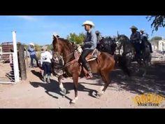 Bailando Caballos En Honor Al Amigo Nono Armenta - Suscribete y Comparte...
