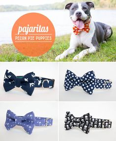 Dog collars with style! #bowtie #dog #collar