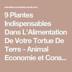 9 Plantes Indispensables Dans L'Alimentation De Votre Tortue De Terre - Animal Economie et Conseil