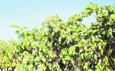 Ribera del Duero muestra su poder