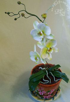 Cake Orchid in a clay pot.
