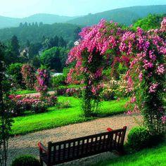 Blumengärten in Baden-Baden ~ Germany
