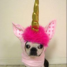 Unicorn pup.