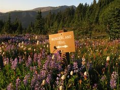 Wonderland Trail in Klapatche Park, Mount Rainer, Washington