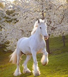 A beauty trotting in Spring !