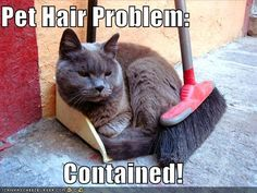 Pet hair problem contained