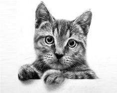 30 Beautiful Cat Drawings - Best Color Pencil Drawings and Paintings   Read full article: http://webneel.com/cat-drawing   more http://webneel.com/daily   Follow us www.pinterest.com/webneel