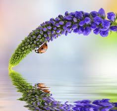 Ladybird by Tomasz Skoczen on 500px
