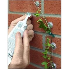 Tumax No Drill Easy Trellis Plant Anchor Outdoor Christmas Light Hanging KitThis is an ingenious product. you can make a trellis of any shape and put it almost anywhere. Use silicone glue, wire from anchor to anchor to create a frame. use vinyl tape Outdoor Projects, Garden Projects, Garden Ideas, Diy Projects, Wall Trellis, Plant Trellis, Garden Trellis, Diy Trellis, Trellis Design