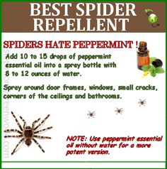 natural spider repellent...I will use WHATEVER works cause I hate the creepy crawly things but don't need to kill them....just keep them away from me LOL