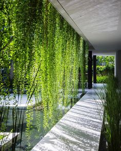 "22.2k Likes, 127 Comments - Interior Design Magazine (@interiordesignmag) on Instagram: ""Lush tropical foliage is an integral part of the architecture at @MIA_Design_Studio's Pure Spa.…"""