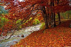 Selva de Irati en otoño #Navarra