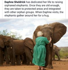 Daphne Sheldrick: because of the love she has shown these orphans, they welcome… .Daphne Sheldrick: because of the love she has shown these orphans, they welcome her back. Cute Funny Animals, Cute Baby Animals, Funny Cute, Animals And Pets, Elephant Facts, Elephant Love, Amor Animal, Mundo Animal, Animal Facts