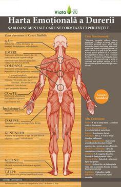Harta emotionala a corpului si durerilor