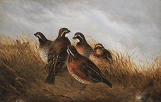 Bevy of Quails Van-Go Paint-By-Number Kit
