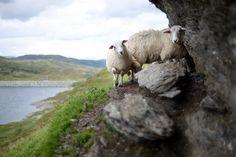 Eko-wypas. Zajrzyj na: http://puszystaowca.pl/ekologiczny-wypas-owiec/