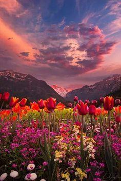 88 Meilleures Images Du Tableau Fleurs En Paysages En 2019 Nature